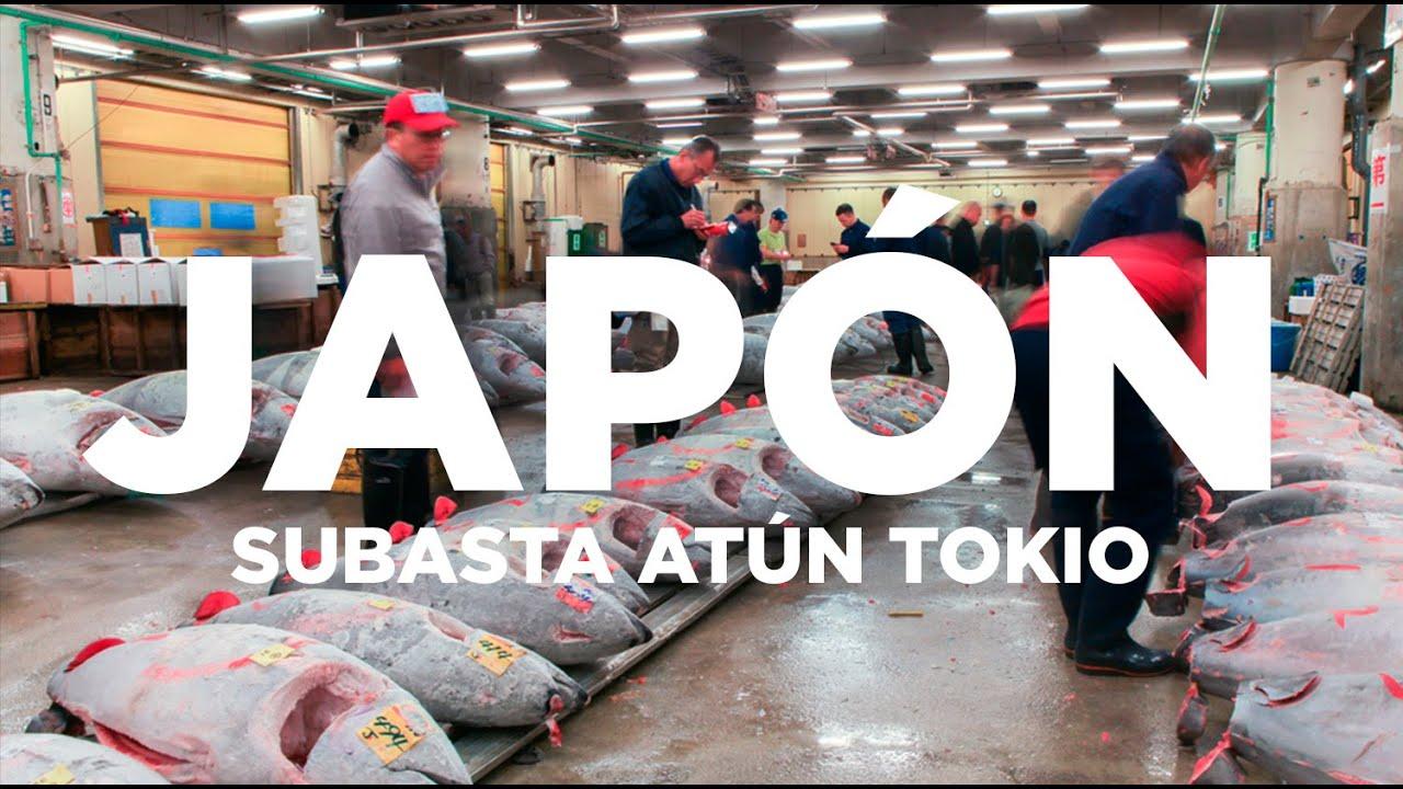 Lo mejor para hacer en Mercado de Toyosu