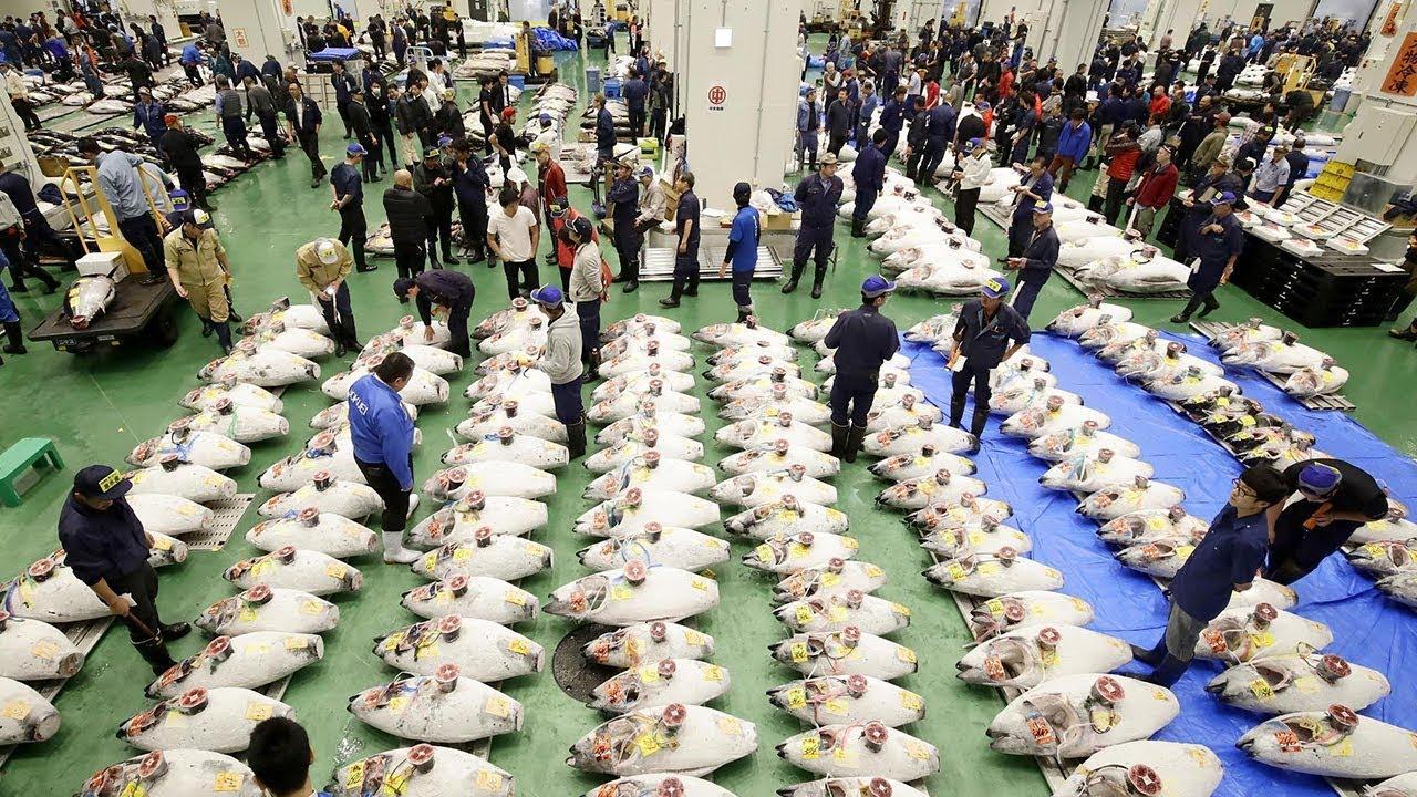 Mercado de pescado de Toyosu: Lo que hay que saber antes de ir